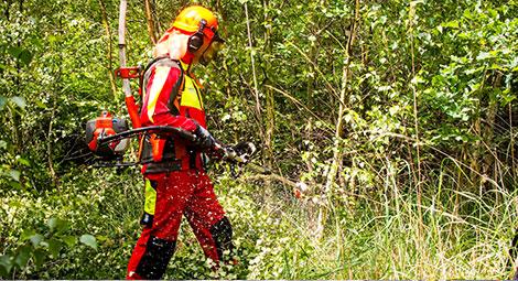 Grüne Arbeitssicherheit Forst