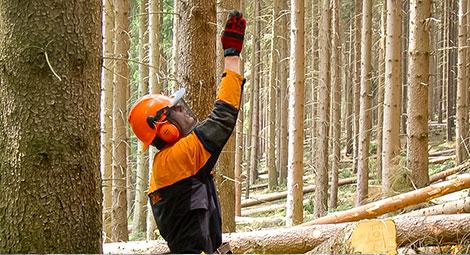 Grüner Arbeitsschutz Forstwirtschaft